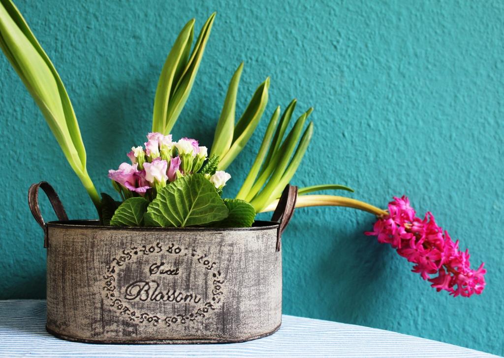 Blume_Küche
